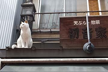 白猫、映えます