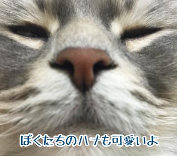 でっかい鼻〜